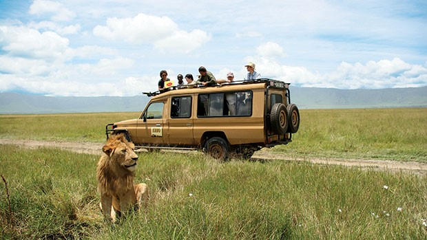 Lion sat in grass with safari vehicle