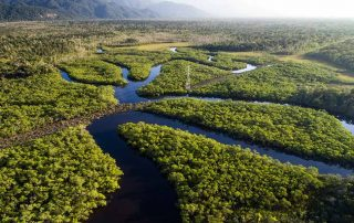Brazil Animals - Oxbow Lakes