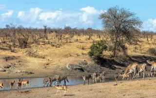 African Safari Animals