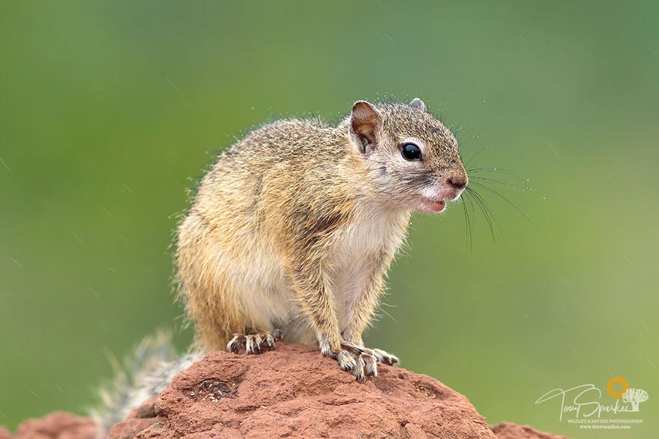 wildlife photo tips - Tree Squirrel