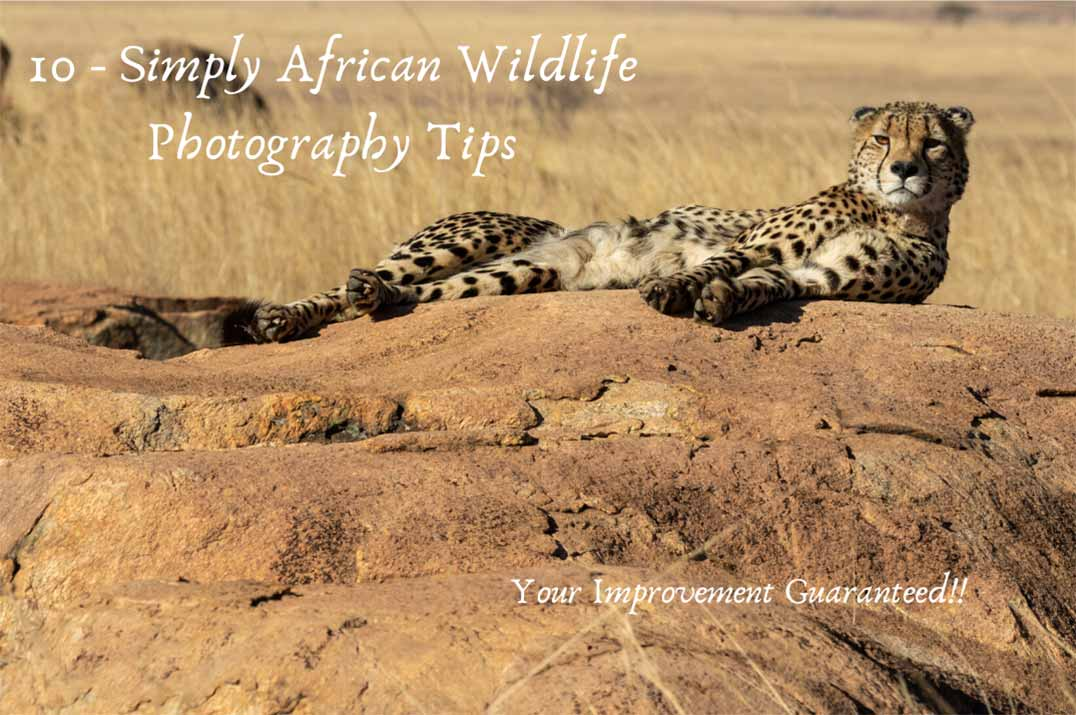 Cheetah lying on a rock - African Wildlife Photography Tips