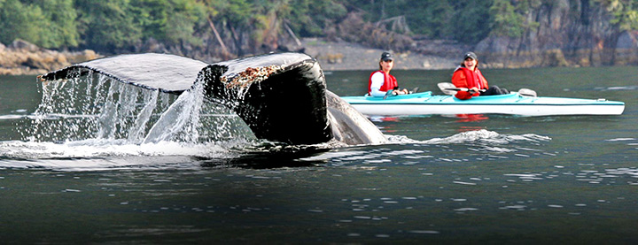 Best Time to Visit Alaska people canoeing near a whales tail