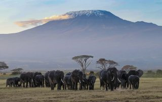 Best-Time-to-Visit-Tanzania - Elephants and view of Kilimanjaro
