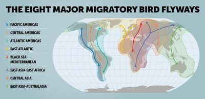 Afro-Palearctic Migrant - Flyways Map